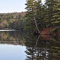 Rope Swing On Bear Creek Lake by Bill Cannon