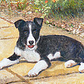 Rory Border Collie Puppy by Richard James Digance