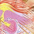 Rosacea Skin Disorder by John Bavosi