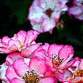 Rose 121 by Pamela Cooper