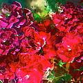Rose 143 by Pamela Cooper