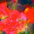 Rose 144 by Pamela Cooper