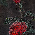 Rose 85 by Pamela Cooper