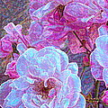 Rose 94 by Pamela Cooper