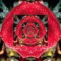 Rose Cut by Cathy Blake