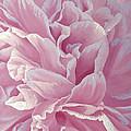 Rose Dream by Olena Lopatina
