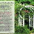 Rose Garden by Carolyn Marshall
