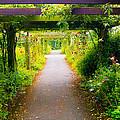 Rose Garden by Sandor Petroman