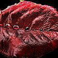 Rose Leaf Macro With Drops by Debbie Portwood