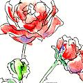 Rose Paintings 1 by Gordon Punt