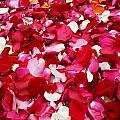 Rose Petals by Gregory Smith
