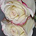 Rose Reflection by Marianne Troia