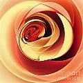 Rose Series - Pink by Klara Acel