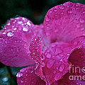 Rose Water Beads by Susan Herber