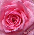 Rose With Water Droplets by Maria Malevannaya