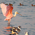 Roseate Spoonbill At The Bay by Roena King