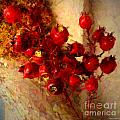 Rosehips by Christine S Zipps
