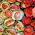 Roses by Dave Mills