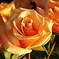 Roses For Me by Cheryl Fecht