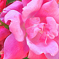 Roses Perfectly Pink by Regina Geoghan