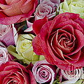 Roses Roses by Jim And Emily Bush