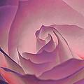 Rosy Daydreamer by Linda Tiepelman