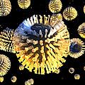 Rotavirus Particles, Artwork by Carl Goodman