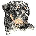 Rottweiler-artwork by Gordon Punt