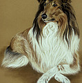 Rough Collie by Patricia Ivy