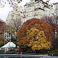Round Autumn Trees by Lorraine Devon Wilke
