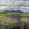 Roundstone Bog by Steve Watson