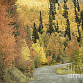 Routt National Forest by David Waldrop