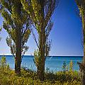 Row Of Cypress Trees At Point Betsie In Michigan No.0924 by Randall Nyhof