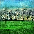 Row Of Trees by Jill Battaglia