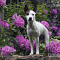 Ruby In The Garden by Denise Dempster