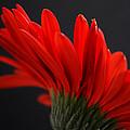 Ruby Red by Melanie Moraga