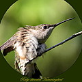 Ruby-throated Hummingbird  - The Stretch by Travis Truelove