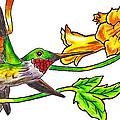 Ruby Throated Hummingbird by Rich Walter