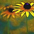 Rudbeckia Hirta by Tom Gari Gallery-Three-Photography