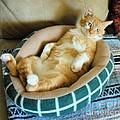 Rudy's Nap Time by Cheryl Poland