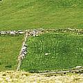 Ruins Of Irish Chieftains House Near Moll Gap Ireland by Larry Pegram