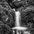 Running Through The Mossy Rocks Bw by Mitch Johanson