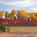 Rural Country Autumn Scenic View by James BO Insogna