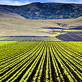 Rural Landscape With Planted Crops by David Buffington