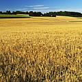 Rural Summer Scene by Jochen Schlenker