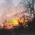 Rural Sunset  Art by Debbie Portwood