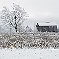 Rural Winter by Elaine Mikkelstrup