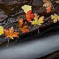 Rushing Autumn by Jim Speth