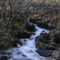 Rushing Creek by Doug Lloyd