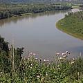 Russian Thistle By The North Saskatchewan River by Jim Sauchyn
